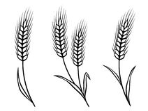 Isolated wheat ears Stock Images