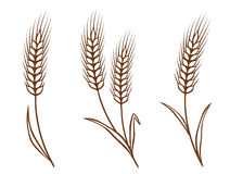 Isolated wheat ears set Royalty Free Stock Photos