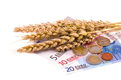 Isolated wheats harvest ears and euro Royalty Free Stock Images