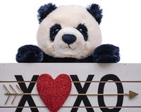 Isolated on white background stuffed plush Panda Bear toy is holding a Heart XOXO hugs and kisses wooden sign. Valentine`s Day stock images