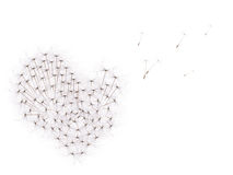 Isolated on white dandelion seeds heart Royalty Free Stock Image