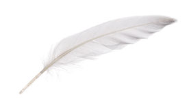 Isolated white goose feather Royalty Free Stock Image