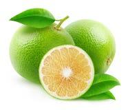 Isolated white grapefruits Stock Images