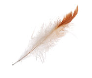 Isolated white and orange straight feather Stock Images