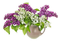 Isolated white purple lilac branches Royalty Free Stock Photos