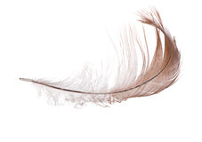 Isolated on white single light brown feather Royalty Free Stock Photo
