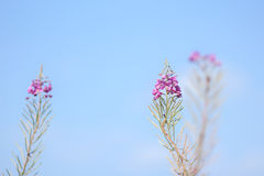 Isolated wildflowers Royalty Free Stock Photos