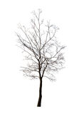 Isolated winter dark bare tree Royalty Free Stock Image