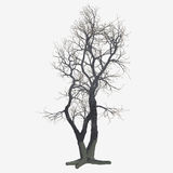 Isolated Winter Tree. An isolated barren winter tree Stock Photography