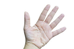 Isolated wrinkle young women fingers. Royalty Free Stock Photography