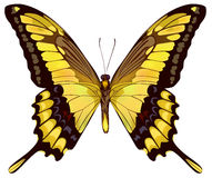 Isolated Yellow Butterfly Royalty Free Stock Images