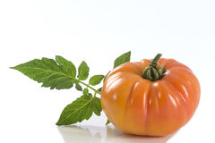 Isolated yellow heirloom tomato Stock Images