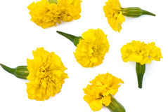 Isolated yellow meadow flowers Stock Photo