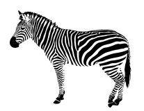 Isolated zebra silhouette vector black stripes Royalty Free Stock Photos
