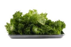 Isolatgräsplan lämnar salladgrönsaken på vit, nya delicios arkivfoto