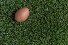 Isolatieconcept: één ei ligt op gras Royalty-vrije Stock Foto