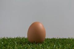 Isolatieconcept: één ei ligt op gras Stock Afbeelding