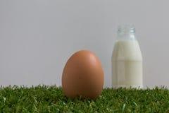 Isolatieconcept: één ei ligt op gras Royalty-vrije Stock Afbeeldingen