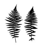 Fern Leaf Vector Background Illustration Royalty Free Stock Photos