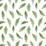 Fern Leaf Vector Background Illustration. Isolation Fern Leaf Vector Background Illustration EPS10 Stock Image