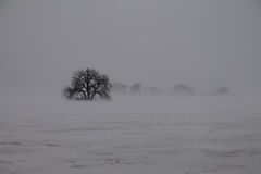 Isolation with Tree in Ground Blizzard Royalty Free Stock Images