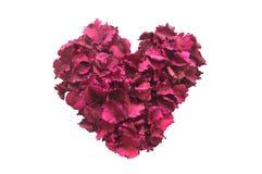 Isolato aromatico asciutto dei fiori a forma di cuore Fotografia Stock
