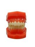 Isolato dei denti delle mandibole della protesi dentaria su fondo bianco Fotografie Stock Libere da Diritti