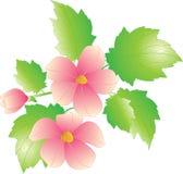 Isolato dei fiori Immagini Stock