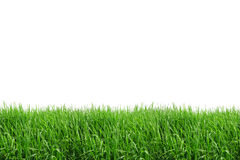 Isolato del campo di erba Immagine Stock Libera da Diritti