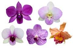 Isolato del fiore di 5 orchidee su fondo bianco Fotografia Stock Libera da Diritti