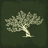 Isolato dell'icona della siluetta di olivo Fotografia Stock