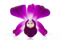 Isolato dell'orchidea su fondo bianco Fotografie Stock