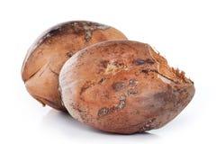 Isolato della noce di cocco di Brown su fondo bianco Immagini Stock Libere da Diritti