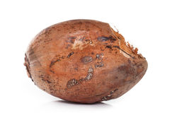 Isolato della noce di cocco di Brown su fondo bianco Fotografia Stock Libera da Diritti