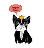 Isolato di simbolo di divertimento della regina del bulldog francese del cane su bianco Fotografia Stock Libera da Diritti