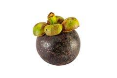 Isolato porpora della frutta del mangostano su fondo bianco Fotografie Stock Libere da Diritti