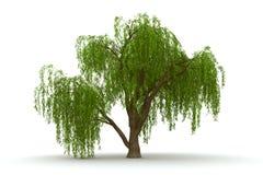 isolato verde del salice piangente dell'albero 3d Fotografie Stock Libere da Diritti