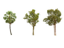 Isolatträd på vit bakgrund Royaltyfria Foton