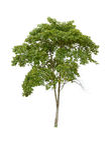 Isolatträd på vit bakgrund Royaltyfri Fotografi