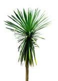 Isolatträdet Fotografering för Bildbyråer