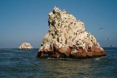 Isole del guano - Islas Ballestas, isole fuori dal Perù immagine stock libera da diritti