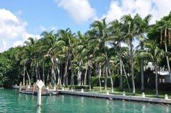 Isole della palma & della stella Fotografia Stock