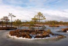 Isole della palude nello stagno congelato della palude Fotografie Stock