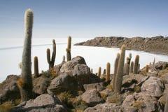 Isole in deserto Fotografia Stock