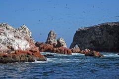 Isole di Ballestas Fotografie Stock
