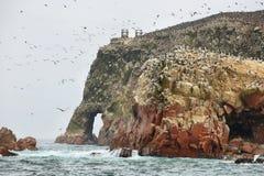Isole di Ballestas nel Perù Fotografie Stock