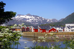 Isole di Lofoten VI Fotografie Stock
