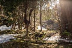Isole di neve in foresta verde illuminata con il sole Fotografia Stock