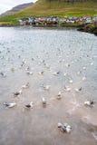 Isole faroe Fotografie Stock Libere da Diritti