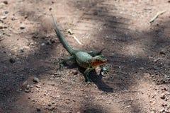 Isole Galapagos fotografia stock